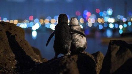 πιγκουίνοι χήροι φωτογραφία viral