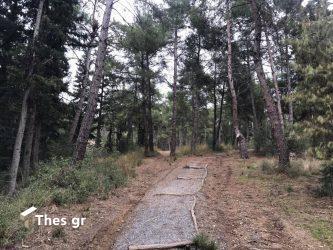 """WWF: """"Αφανίστηκαν"""" 430 εκατομμύρια στρέμματα δασών στον πλανήτη"""