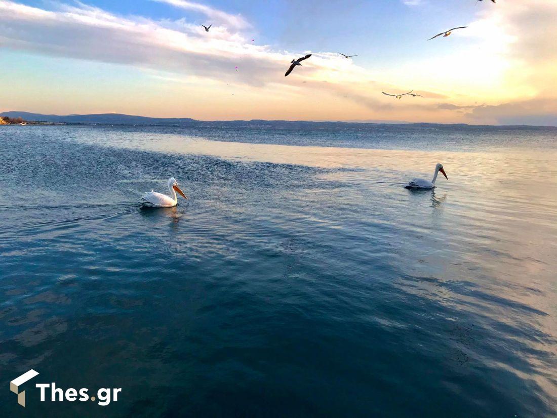 Θεσσαλονίκη Νέα Κρήνη πελεκάνοι