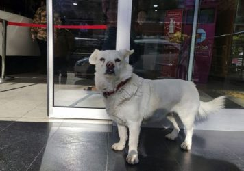 Συγκινητικό: Σκυλίτσα περίμενε επί μέρες τον κηδεμόνα της έξω από νοσοκομείο (ΒΙΝΤΕΟ)