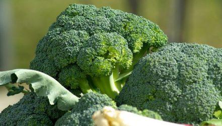 Μπρόκολο, το λαχανικό από την… Ιταλία με τα απίστευτα οφέλη