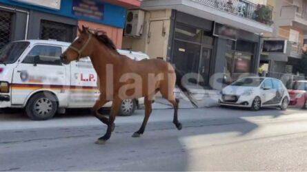 Αλογο έκανε βόλτες στο κέντρο της Λάρισας (ΒΙΝΤΕΟ)