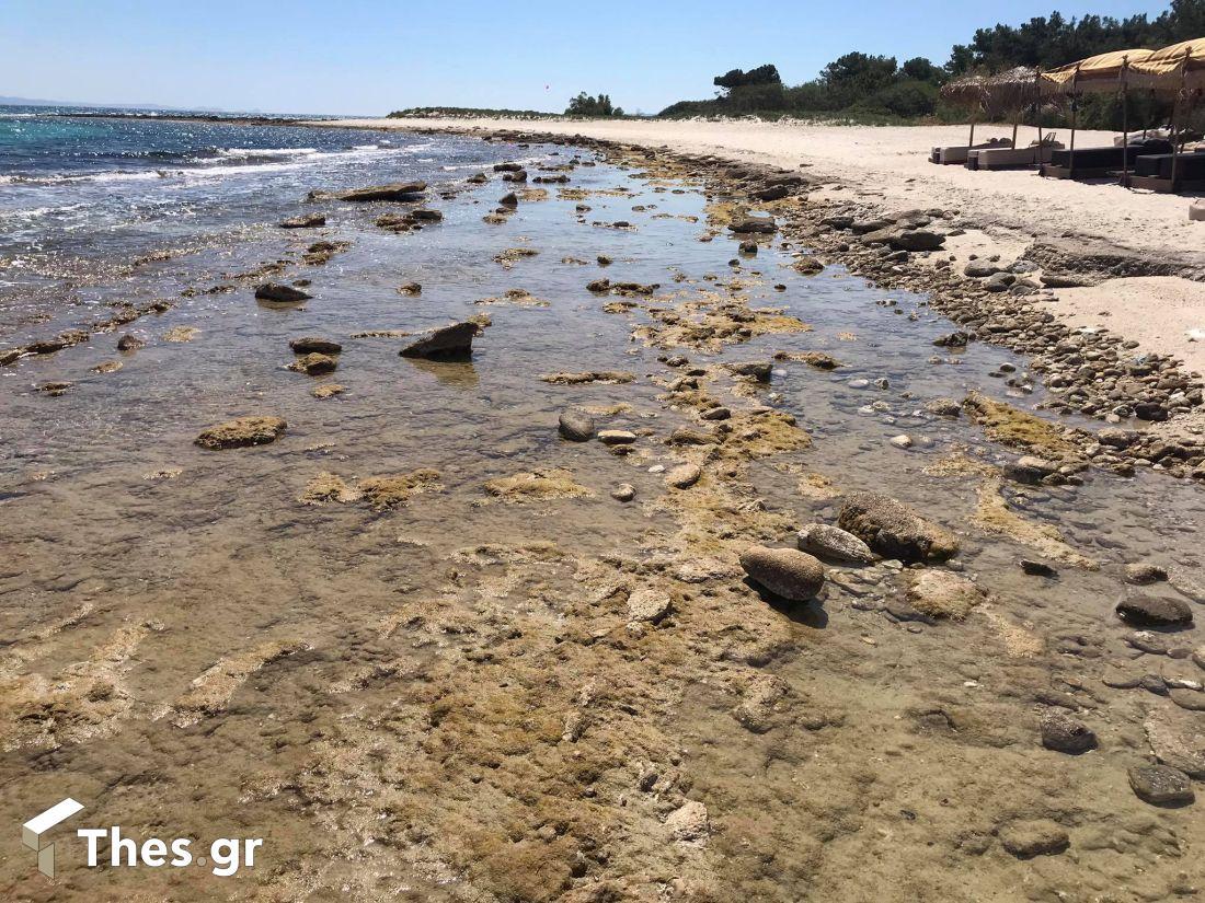 Αφυτος Αθυτος άμπωτη θάλασσα Χαλκιδική