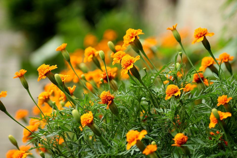 καλύτερα λουλούδια για μπαλκόνι
