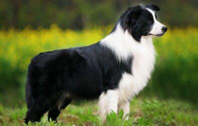 Σκύλος με προβλήματα ακοής μαθαίνει τη νοηματική