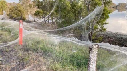 Αυστραλία αράχνες