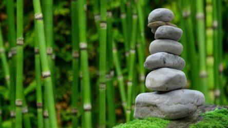 ισορροπία ευεξία ζωή