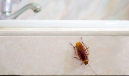 Το κόλπο για να διώξετε τις κατσαρίδες από το σπίτι σας