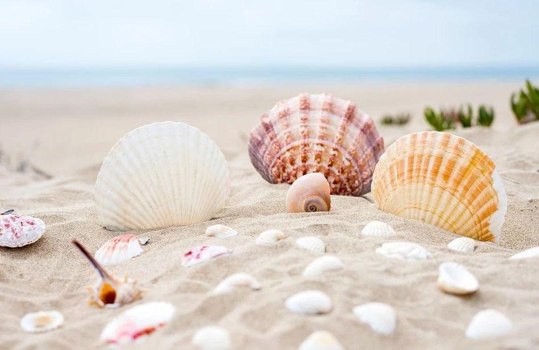 Θάλασσα άμμος κοχύλια