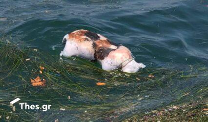 Θεσσαλονίκη: Νεκρό σκυλάκι επιπλέει στον Θερμαϊκό (ΒΙΝΤΕΟ)
