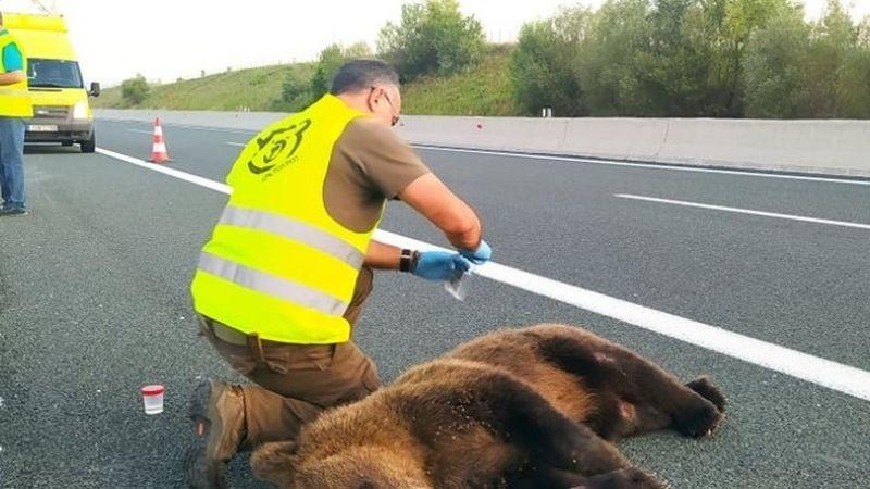 αρκούδα Εγνατία Οδός
