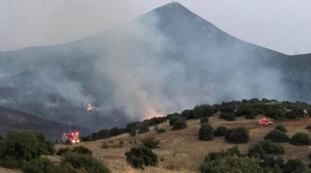 φωτιά ΣΥΡΙΖΑ