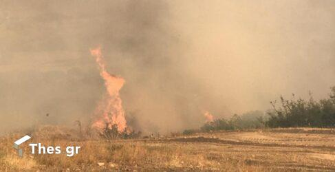 Ιταλία: Τεράστια η καταστροφή από τις φωτιές – 6 νεκροί