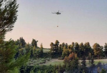 Οι πρόσφατες φωτιές στην Αττική έκαψαν το 16% των δασών της