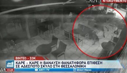 Θεσσαλονίκη: Σοκάρει το βίντεο από τη δολοφονία σκύλου