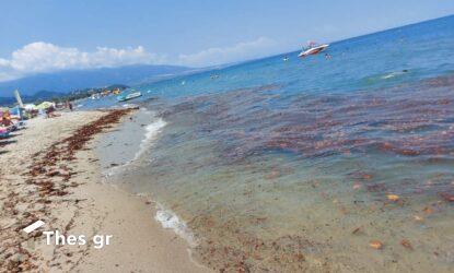Καμμένα ξύλα και αντικείμενα ξεβράστηκαν σε παραλία στην Πιερία (ΦΩΤΟ)