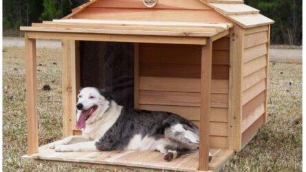 Καβάλα: Εθελοντές από την Ελλάδα και το εξωτερικό κατασκευάζουν σπιτάκια για σκύλους