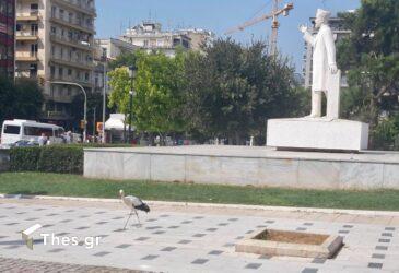 Θεσσαλονίκη πελαργός