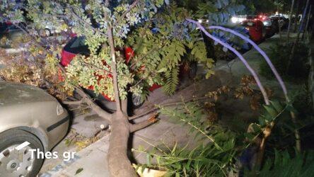 Θεσσαλονίκη: Ο ισχυρός άνεμος έριξε δέντρα και προκάλεσε ζημιές (ΦΩΤΟ)