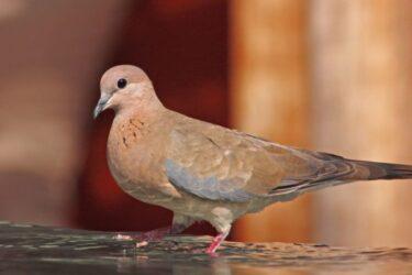 Λέσβος: Ανακαλύφθηκε το φοινικοτρύγονο – Το νέο για την Ελλάδα είδος πουλιού