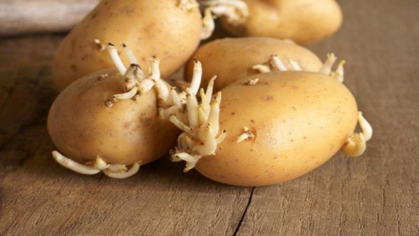 πατάτες φύτρες