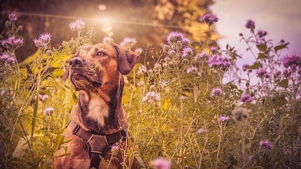 Ο σκύλος μας την Ανοιξη