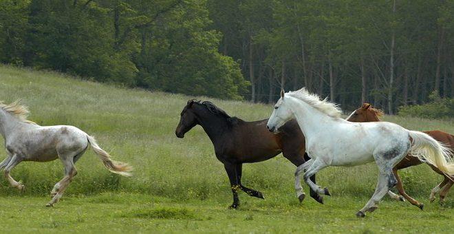 Σκότωσαν έξι άλογα με κυνηγετικό όπλο