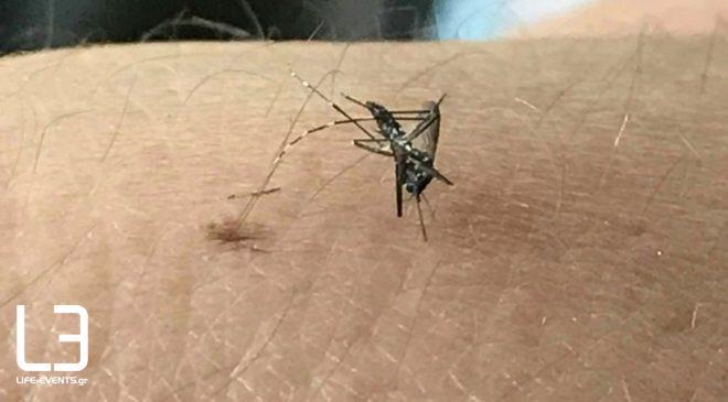 κουνούπια Σέρρες κορονοϊός